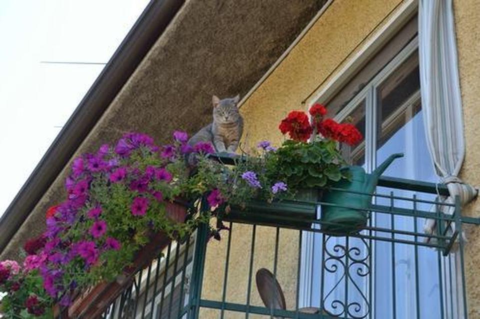 Come avere un balcone fiorito tutto l anno green mag