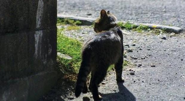 Dieci gatti sono spariti nel nulla nel giro di poche settimane a Polesella: è allarme