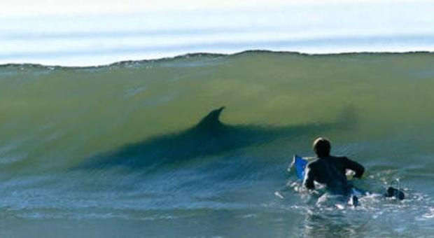 Australia si fa il bagno ma viene attaccato e ucciso da uno squalo - 94 si fa in bagno ...