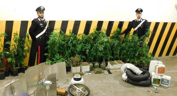 Tre piani di marijuana in casa arrestata una coppia del for Piani di casa in kenya