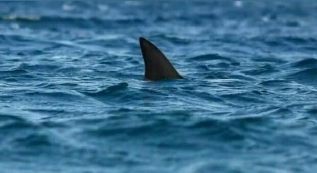 Australia, va a fare il bagno e muore sbranato da uno squalo