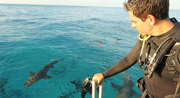 Cinema, Eli Roth a Ischia, la sua battaglia per gli squali: il regista cult Usa premiato