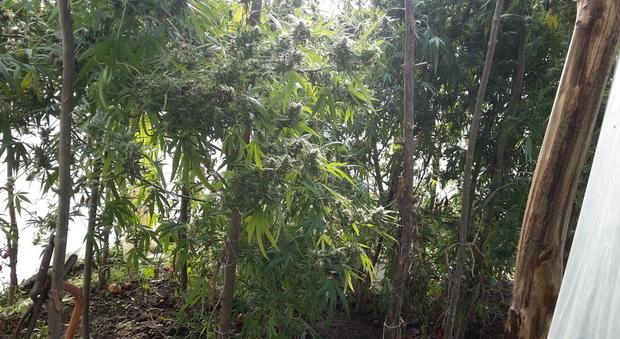 Ecco cosa si pu scoprire facendo un 39 escursione nel bosco una piantagione di droga - Cosa si puo cucinare nel microonde ...