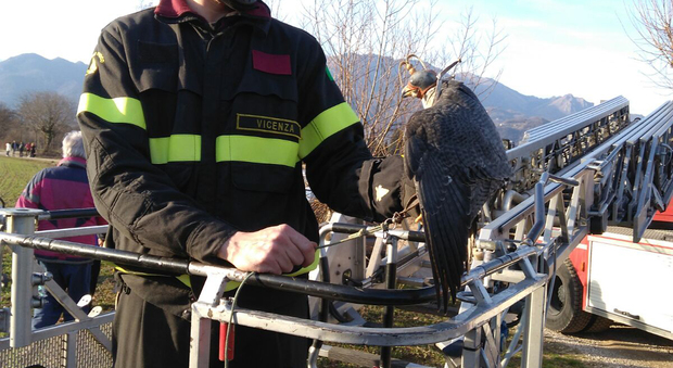 Elicottero Falco : Falco il gazzettino