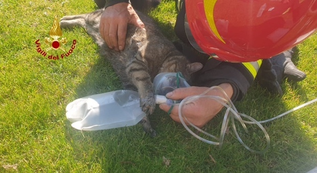 Il gatto con la mascherina dell'ossigeno