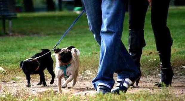 No al canile s al canodromo ok al parco giochi per i fido - Portare il cane al canile ...