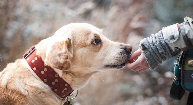 Animali: «Cane obeso come il padrone»: uno studio scientifico rivela la correlazione tra uomo e animale