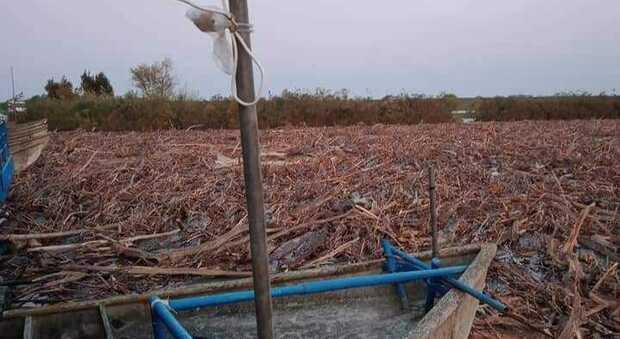 Il fiume Po è in piena, arriva l'ondata di rifiuti: chiusi i ponti di barche