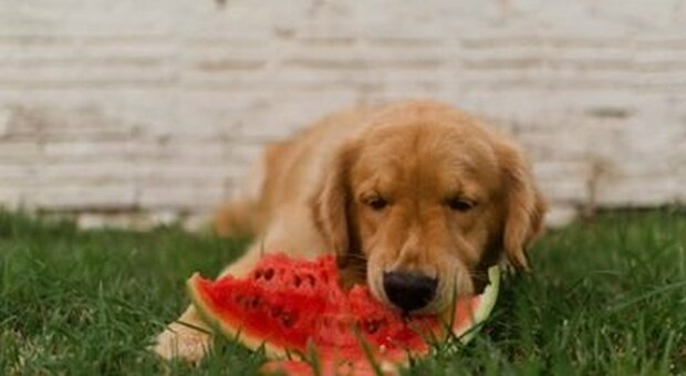 Cani e gatti in vacanza, i consigli del veterinario: attenzione a scottature, aria condizionata e ventilatore