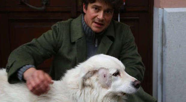 Il cane del vicino abbaia gli spara dalla finestra con il for Casa progetta il trotto del cane