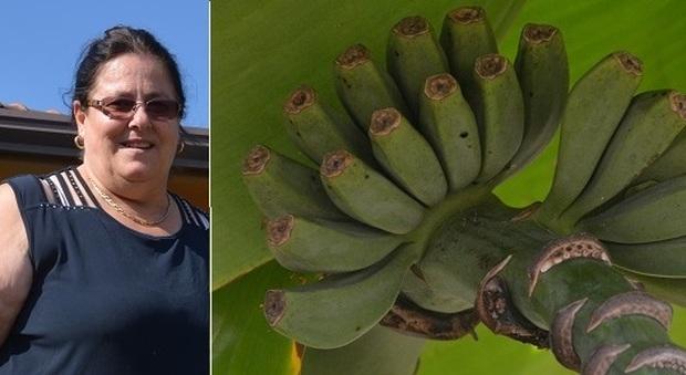 Meteo pazzo banane frutti palma e anguria di 17 kg a for Meteo palma di montechiaro