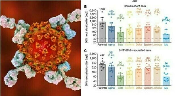 Variante Mu è «altamente resistente agli anticorpi del vaccino e dei guariti», lo studio (in preprint) dal Giappone
