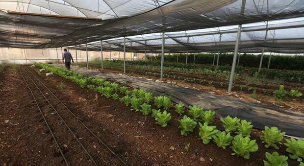 Agricoltura, dopo l'aria arriva l'acqua sanificata: con tecnologia plasma freddo +30% produttività piante