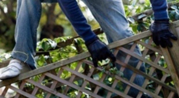 Entra nel giardino dei vicini e picchia i cani guai seri for Giardino e cani