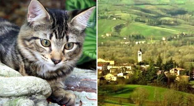 Il paese dove spariscono i gatti: 50 i felini scomparsi da inizio maggio