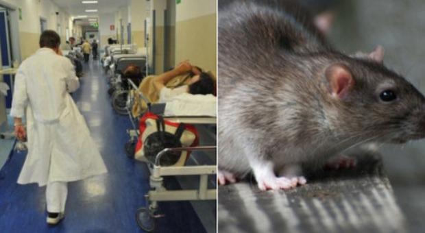Topo morto sul cibo dell'ospedale: «Fatto gravissimo, non si esclude dolo»