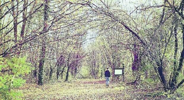 Ex riserva di caccia e bosco del Brunis Via alla riqualificazione