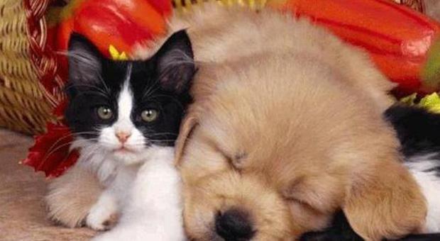 Cane O Gatto Chi Ama I Felini è Più Intelligente