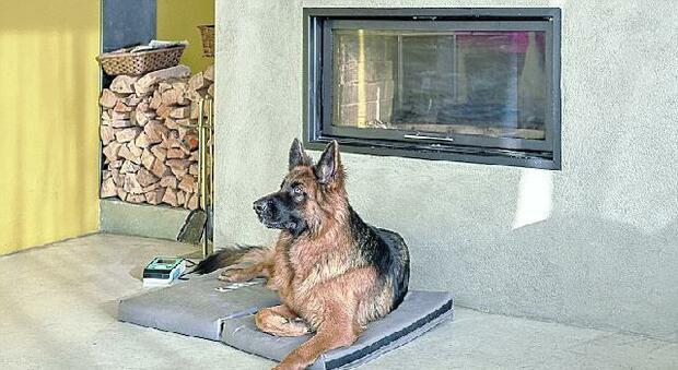 Anche gli animali domestici hanno dolori Iacer lancia la magnetoterapia su misura