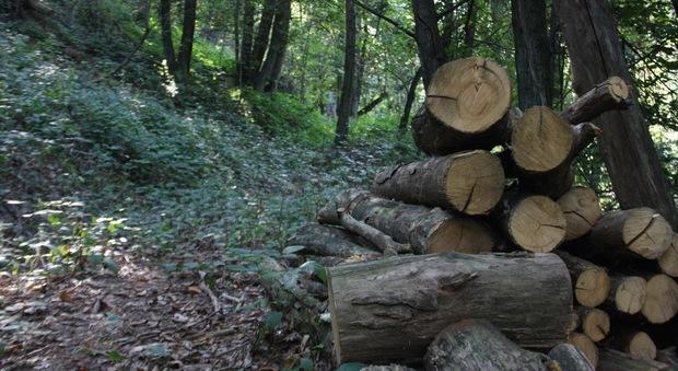 Incidente sul lavoro nei boschi del vittoriese