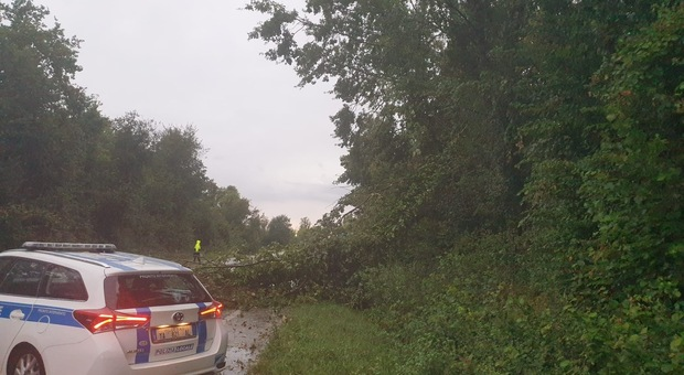 Un albero caduto a Pordenone