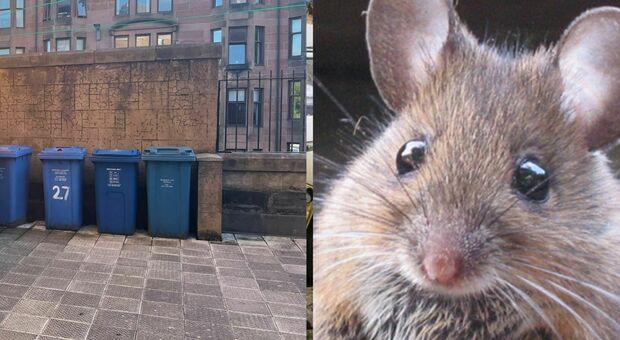 Glasgow invasa dai 1,3 milioni di topi (ma a Londra sono di più). «Infestazioni ovunque»