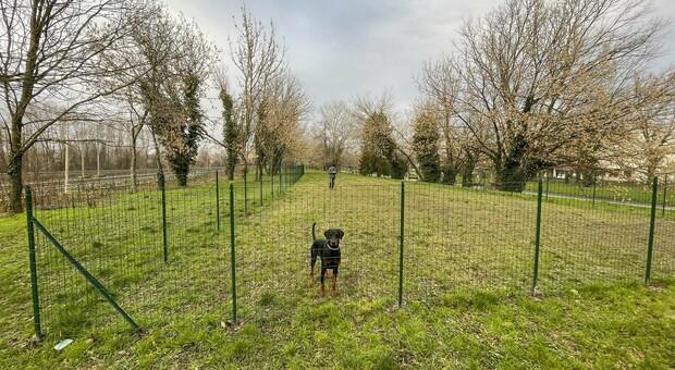 L'area di sgambamento cani creata a dicembre ai giardini dell'Adigetto