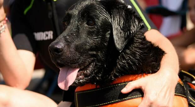 Tarquinia: padre e figlia rischiano di annegare in mare, salvati dai cani bagnino