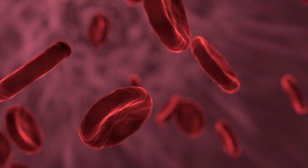 Cos'è la piastrinopenia, la malattia del sangue di Camilla Canepa che si verifica di più nelle donne