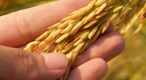 Alimentazione, record del decennio nei prezzi alimentari: Non solo aumenti per petrolio, gas e metalli ma anche oli vegetali e cereali