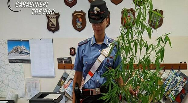 La droga sequestrata dai carabinieri di Treviso