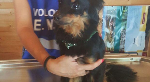 Terremoto: ritrovato il cane Lola Potra' tornare dal proprietario