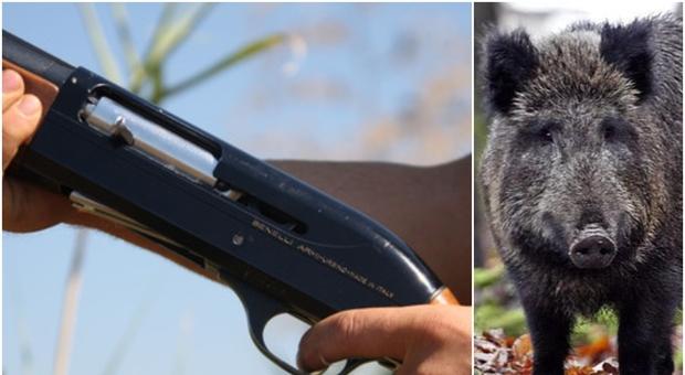 Cacciatore spara a un cinghiale ad Alessandria, ma l'animale lo attacca e lo uccide