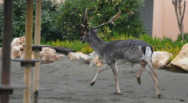 Animali, Oipa: «Esistono modi per metterli in sicurezza durante gli attraversamenti stradali»