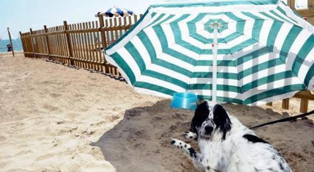 Una spiaggia libera per i cani: presto anche ai Murazzi