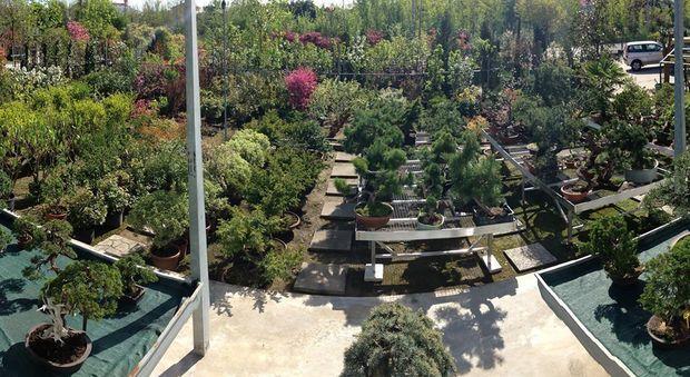 L orto botanico più antico del mondo si trova in italia foto