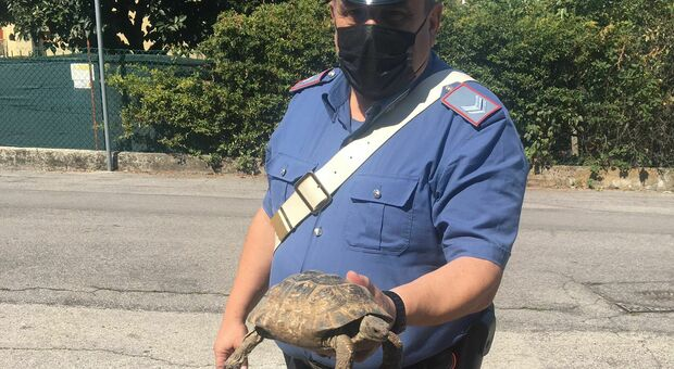 "La tartaruga ""in libera uscita"" salvata dai carabinieri"