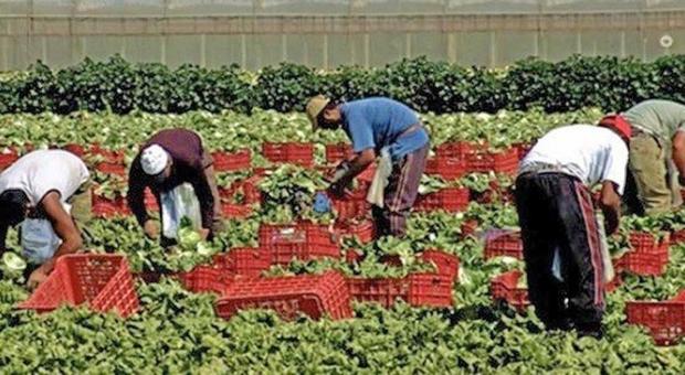 immigrati al lavoro per la raccolta in campo