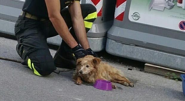 La cagnolina trovata fra le immondizie