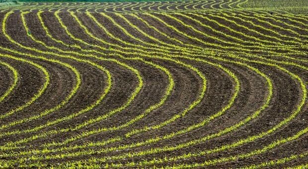 Il caso agricoltura biodinamica/La politica che sceglie di ignorare la scienza