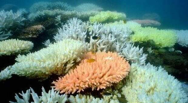 Il riscaldamento globale ha distrutto il 14% dei coralli nel mondo tra il 2009 e il 2018