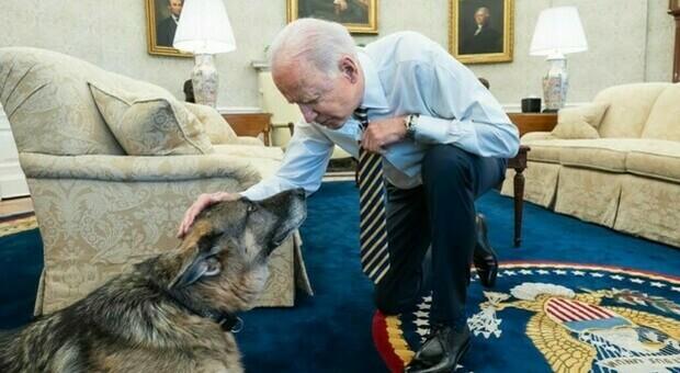 Biden, il cane Major morde un membro della Casa Bianca: è la seconda volta in un mese
