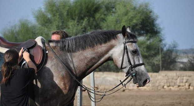 Catanzaro colpito alla testa dal calcio di un cavallo - Avere un cavallo ...