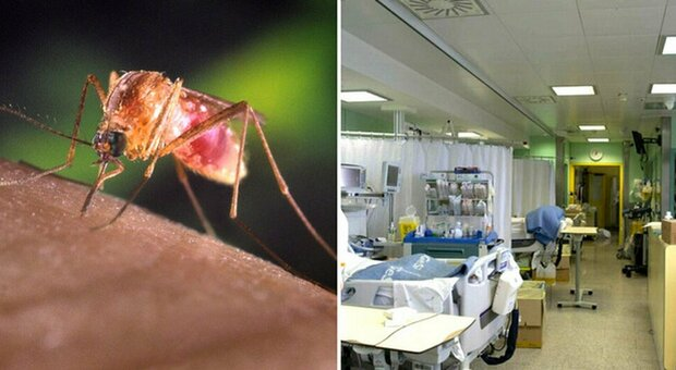 Virus del Nilo, morta una donna in Spagna: è la prima vittima del 2021