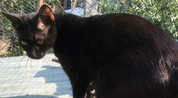 Gatta percorre sei chilometri per tornare dai suoi cuccioli al gattile
