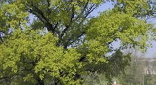 Giardino Di Erbe Aromatiche Nei Parchi Molini E Munaressa