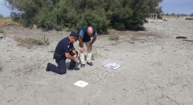 Novanta tartarughe nate a Scano Boa: «Cittadini, non andate in spiaggia a vederle»