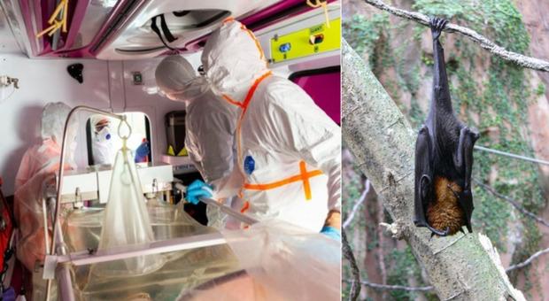 Il virus Nipah uccide un 12enne in India, è allerta sanitaria. Gli esperti: «Identificato nella saliva di pipistrelli»