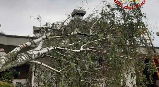 Uno degli alberi caduti per il maltempo in Friuli