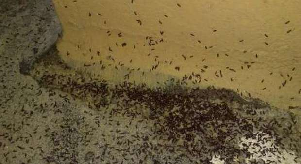 Stanze infestate da parassiti chiuso albergo dopo puntura di un cliente - Parassiti del letto ...